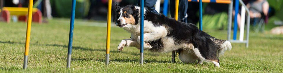 Hundesportzentrum Bielefeld e.V.
